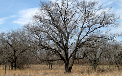 Example of an Oak Savanna