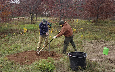Volunteers Planting Oak Trees